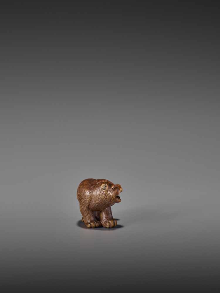 A RARE WOOD NETSUKE OF A SNARLING TIGER UnsignedJapan, 19th century, Edo period (1615-1868)A compact - Image 6 of 11