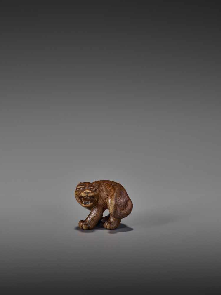 A RARE WOOD NETSUKE OF A SNARLING TIGER UnsignedJapan, 19th century, Edo period (1615-1868)A compact - Image 9 of 11