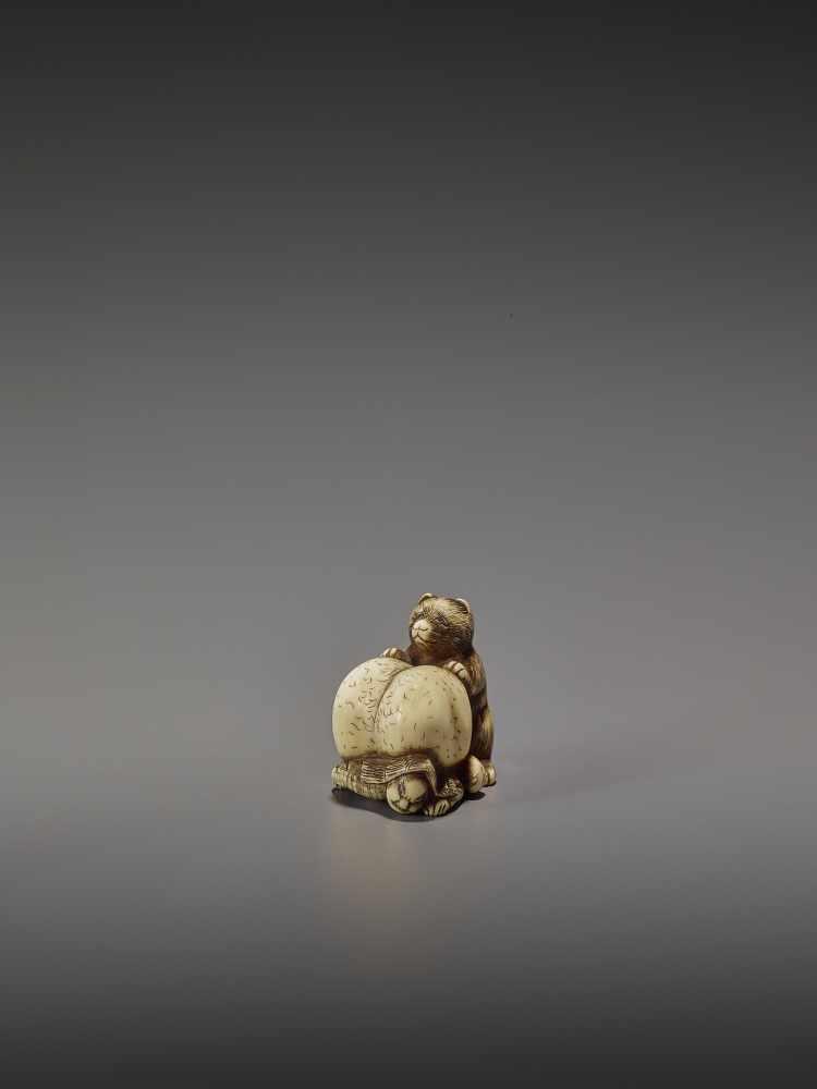 SHUNGETSU: IVORY NETSUKE OF A TANUKI SUFFOCATING A HUNTER WITH HIS SCROTUM By Shungetsu, signed - Image 2 of 11