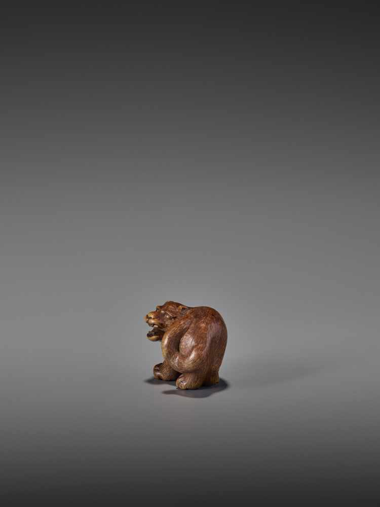 A RARE WOOD NETSUKE OF A SNARLING TIGER UnsignedJapan, 19th century, Edo period (1615-1868)A compact - Image 4 of 11