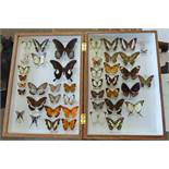 CASED ENTOMOLOGY DISPLAY CONSISTING OF 46 EXAMPLES TO INCLUDE PAPILIO ISWAROIDES CURISI,