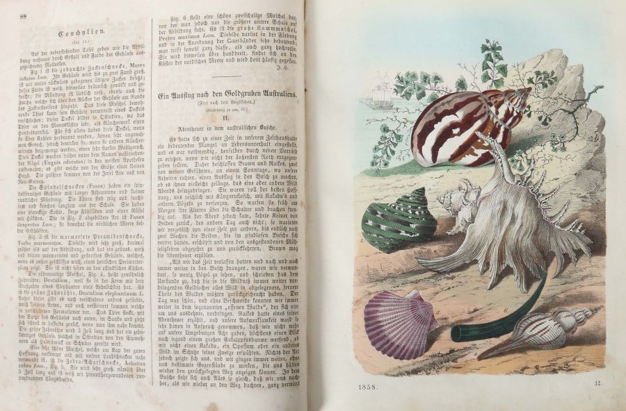 Das Buch der Welt ein Inbegriff des Wissenwürdigsten und Unterhaltendsten aus den Gebieten der - Bild 4 aus 5