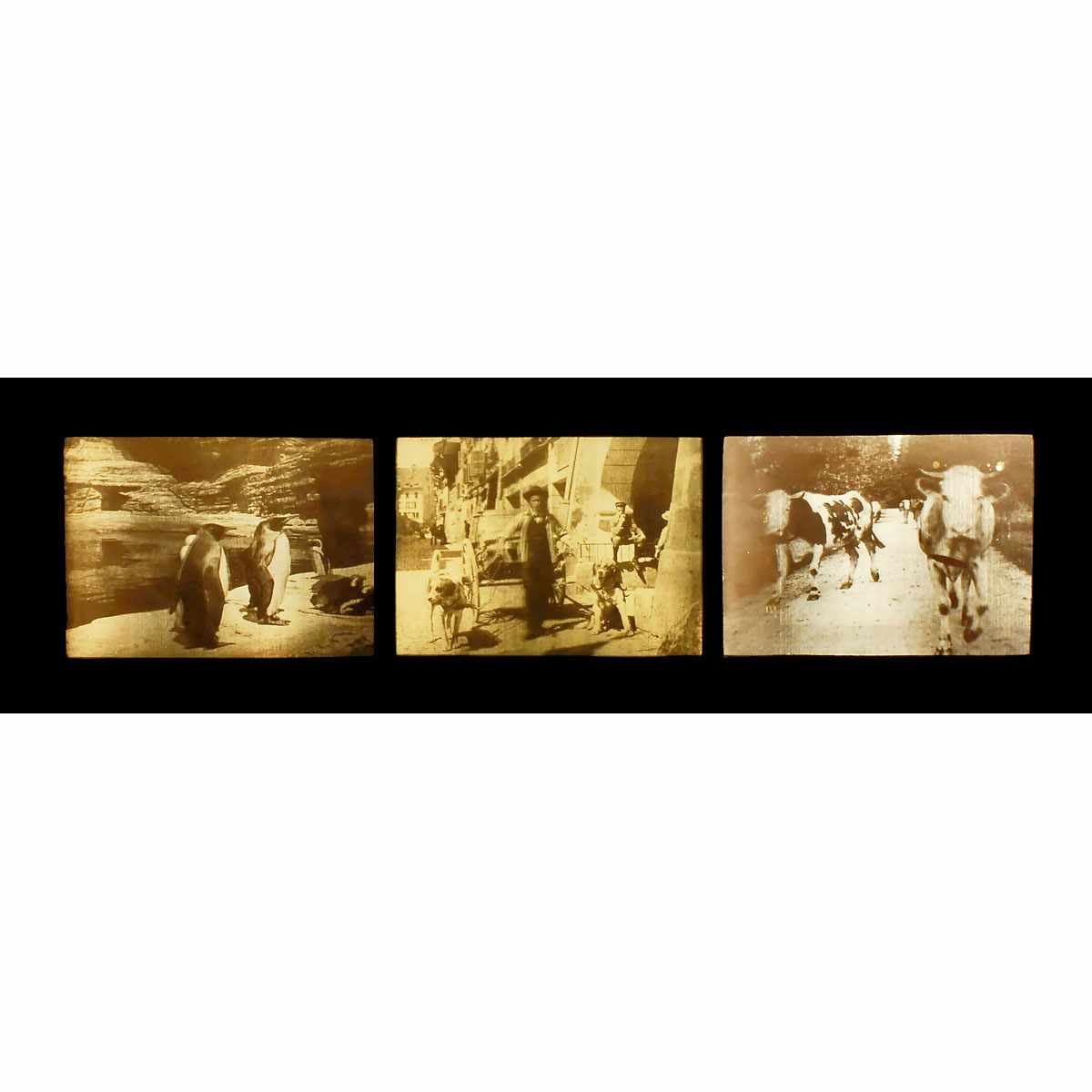 """Auktionslos 35 - 3 x 3D Lenticular Picture by W.R. Hess, c. 1912 """"Stereo-Photo nach W.R. Hess - Stereo-Photographie"""
