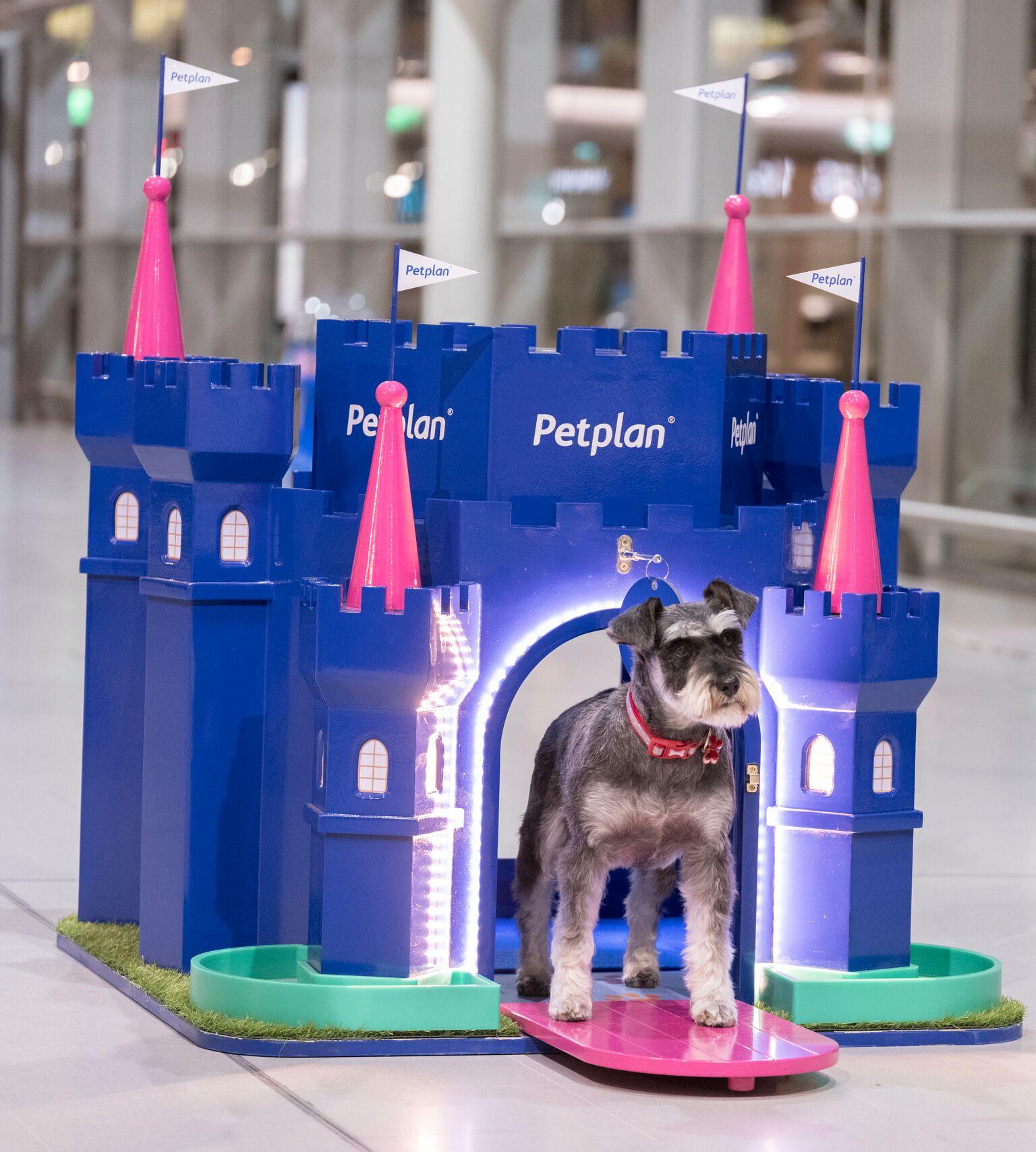 Petplan - Laura D'Alessandro of Henson Franklin - Barkingham Palace - Image 4 of 6