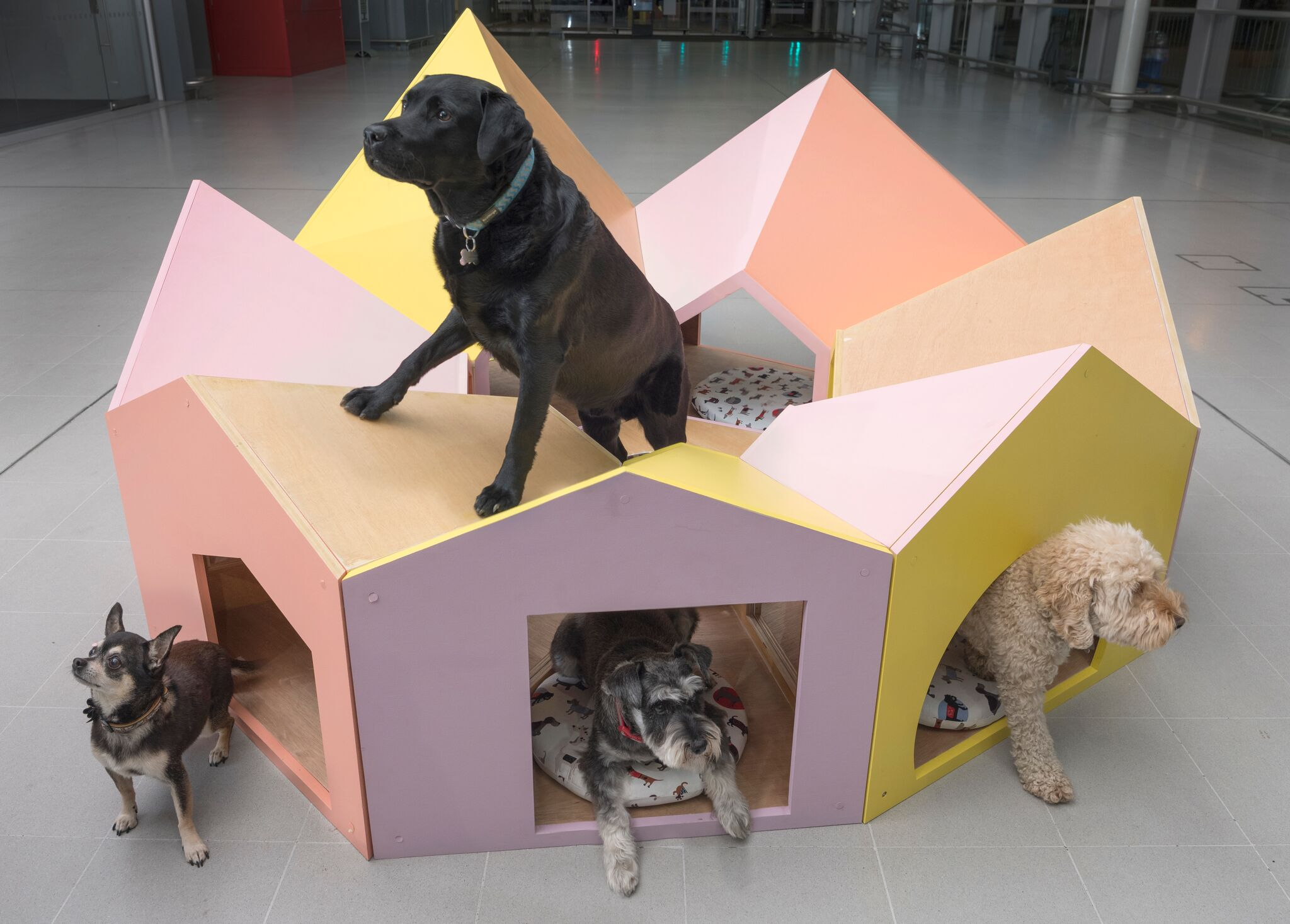 Reservoir Dogs - A Kennel for Friends - SPARK Architects