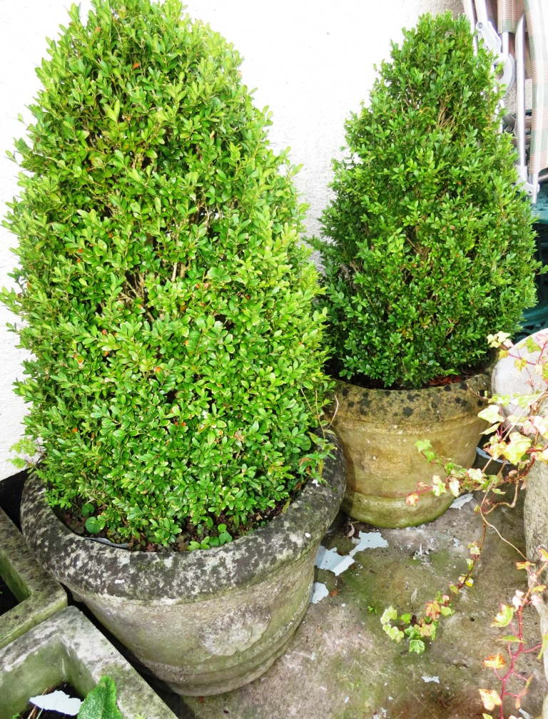 Lot 52 - TWO LARGE COMPOSITE STONE PLANTERS WITH BUSHES