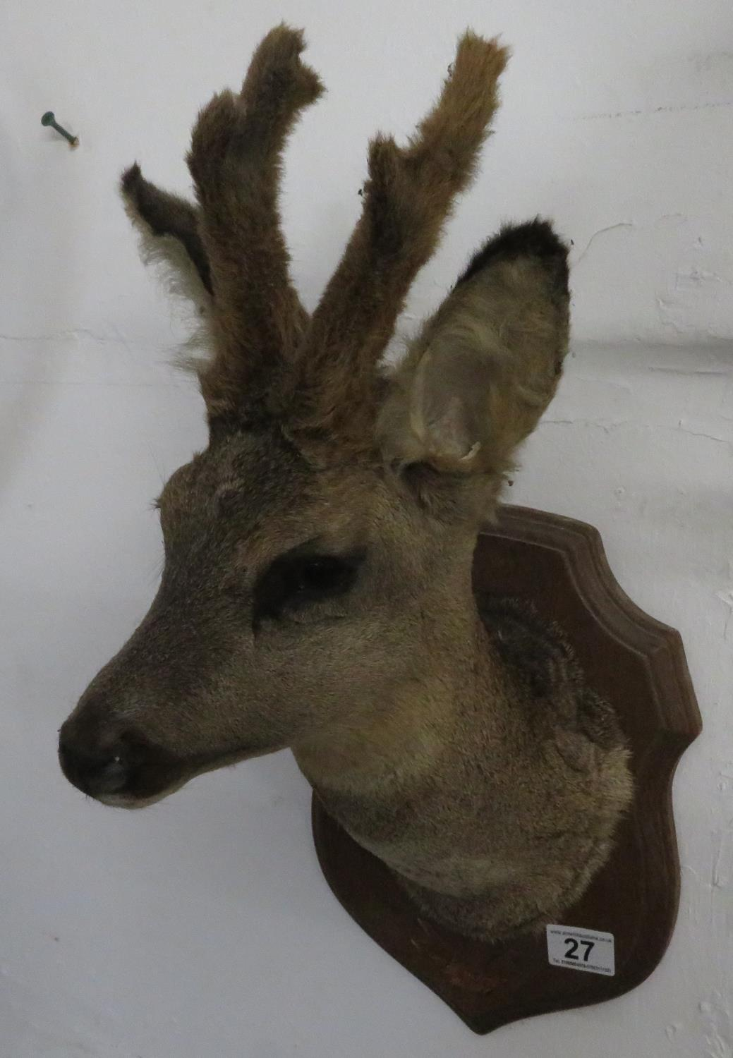 Lot 27 - Large deer's head
