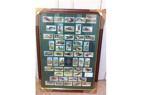 Lot 166 - CIGARETTE CARDS : 1939 Animals of the Co