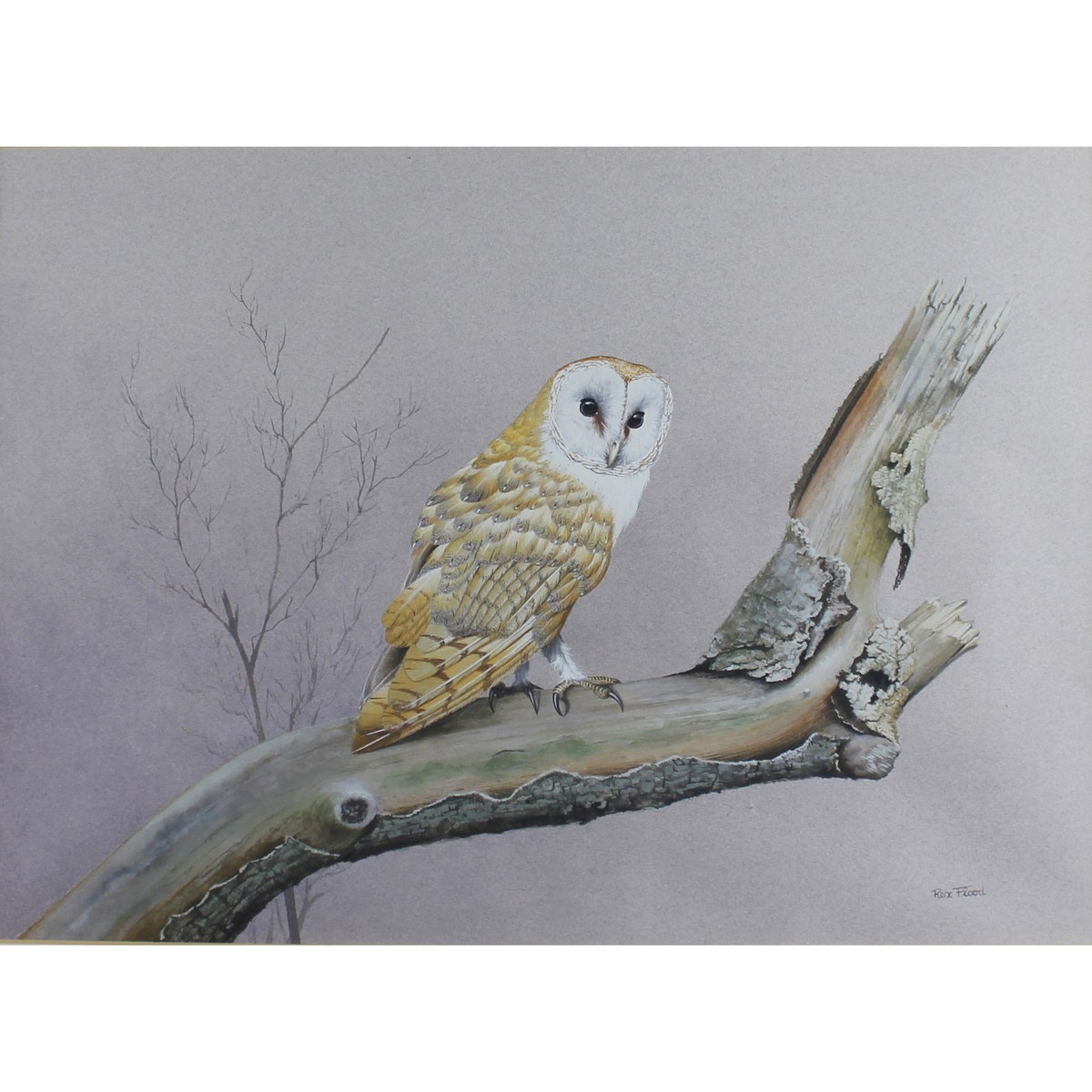 Lot 7 - Flood, Rex Grattan b1928 British AR, Barn Owl.