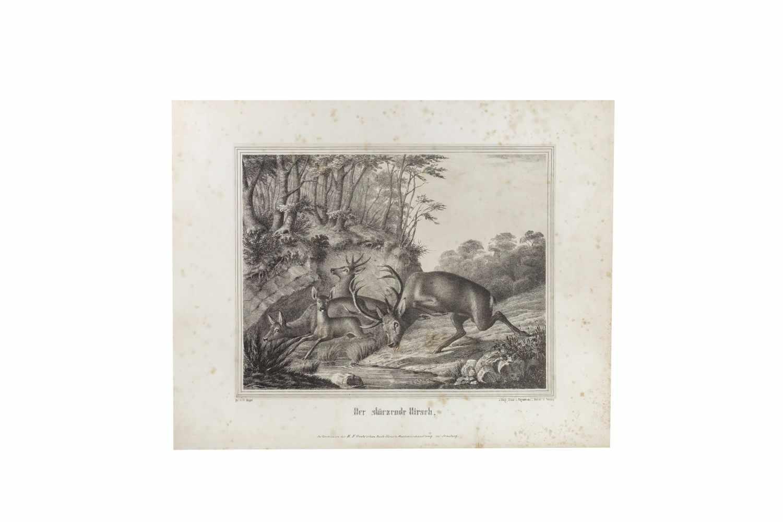 HAPPEL, FriedrichJagd-Scenen nach Original-Zeichnungen. Lithographiert von C. Diedrich. Arnsberg, C. - Image 4 of 4