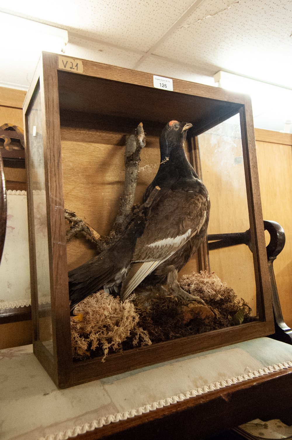 Lot 126 - A SMALL TAXIDERMIC SPECIMEN OF A BIRD
