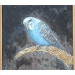 •A BLUE BUDGERIGAR Unsigned framed oil on board, 34.5 x 24.5cm.