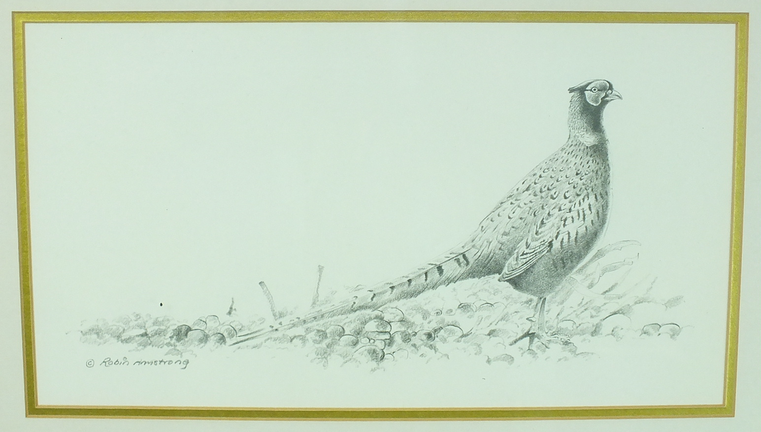 •Robin Armstrong (20th century) WOODCOCK Signed pencil drawing, 21 x 28cm and another PHEASANT, 19 x - Image 2 of 2