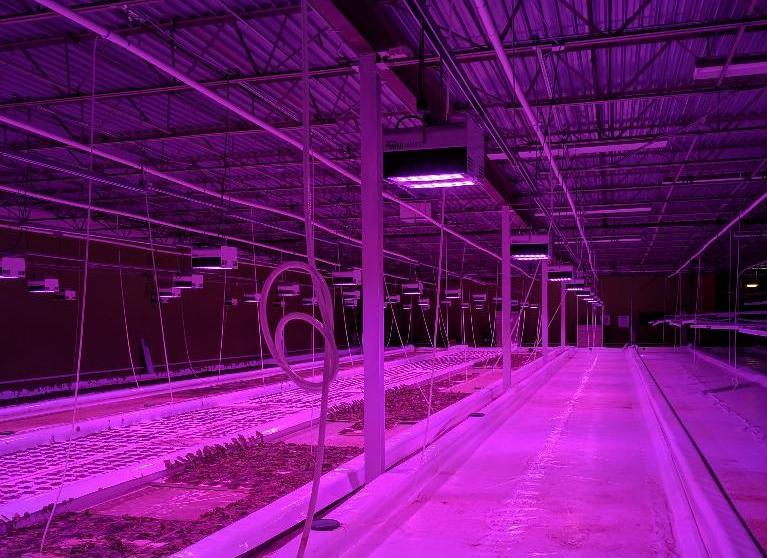 Lot 50 - Illumitex Power Harvest LED Grow Light