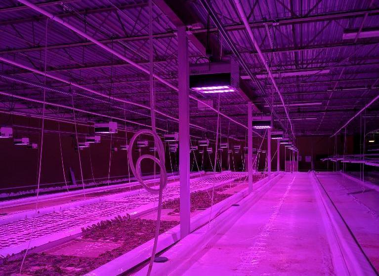 Lot 61 - 3 Illumitex Power Harvest LED Grow Lights
