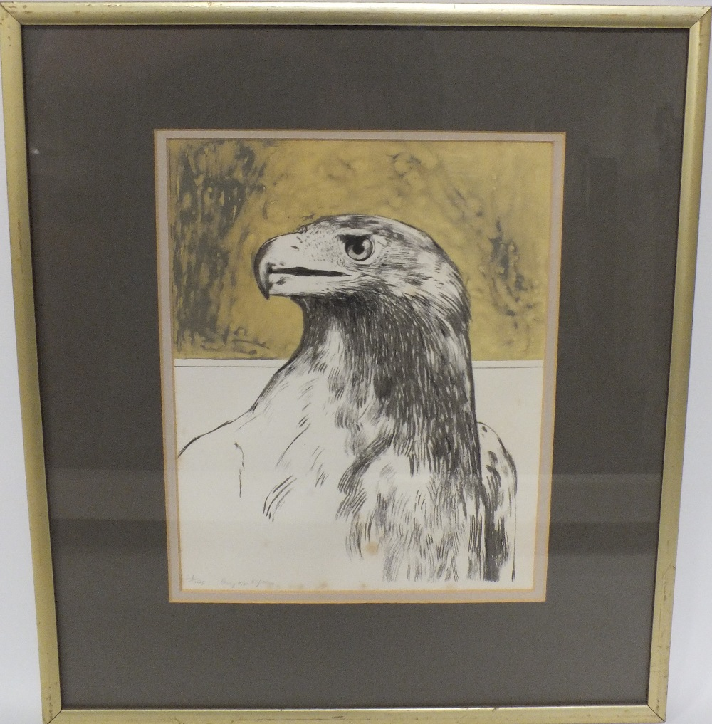 BRYAN ORGAN (b.1935). Study of an eagle, signed in pencil lower left, limited edition lithograph - Image 3 of 3