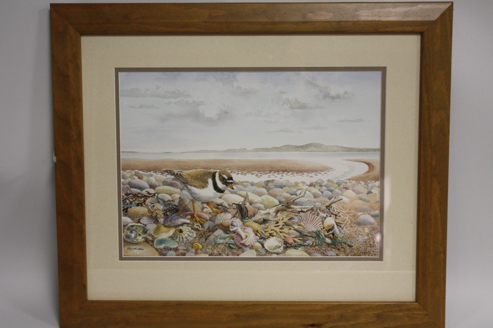 Lot 101 - ELIZABETH WALSH (XX). English school, ringed plover and shells on a rocky shoreline, see label