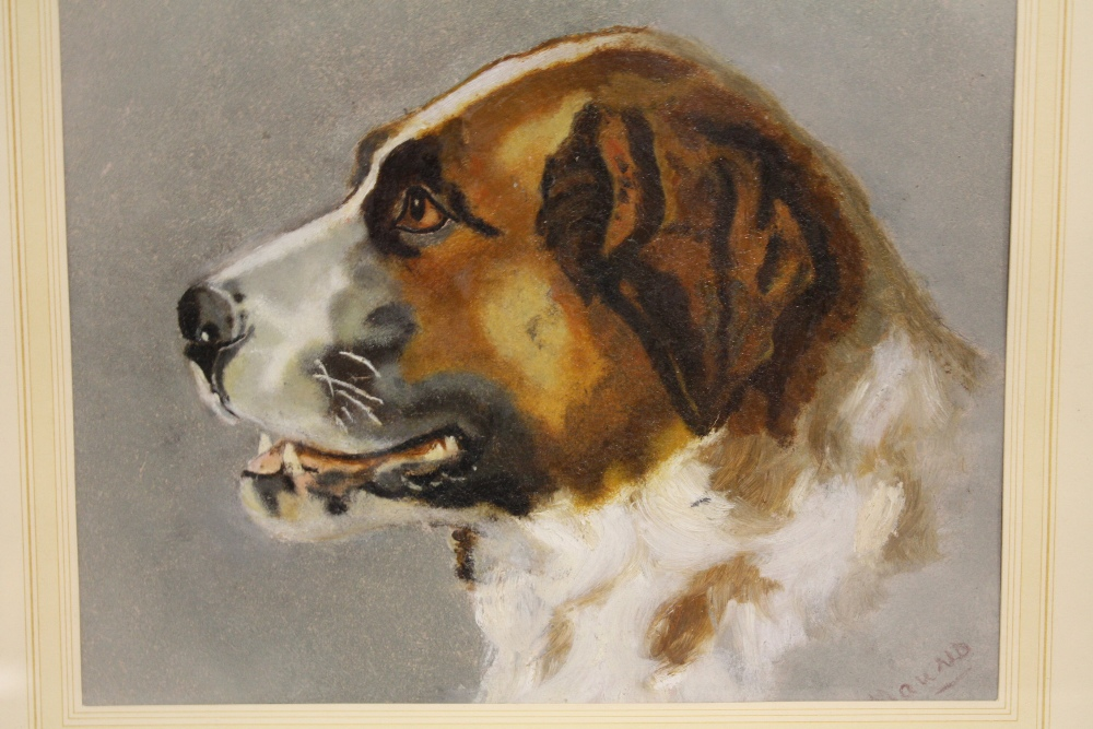 Lot 45 - MAUND. Twentieth century dog study, signed lower right, oil on paper, framed and glazed, 17 x 22 cm,