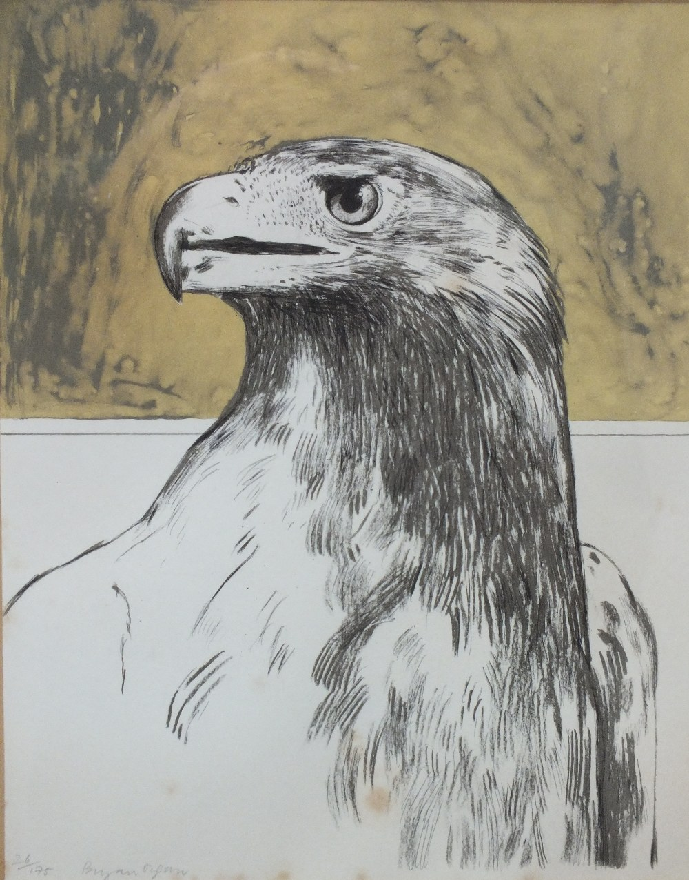 BRYAN ORGAN (b.1935). Study of an eagle, signed in pencil lower left, limited edition lithograph