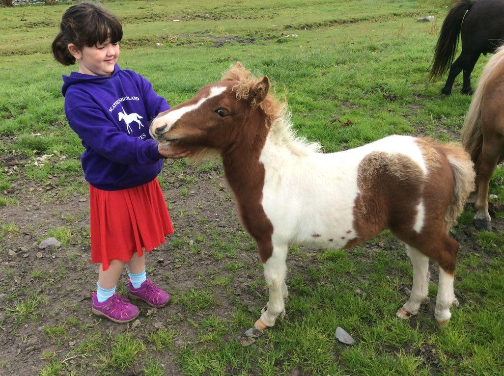 Lot 40 - Skewbald - Standard - Colt Foal, - DOB: 19th May 2017