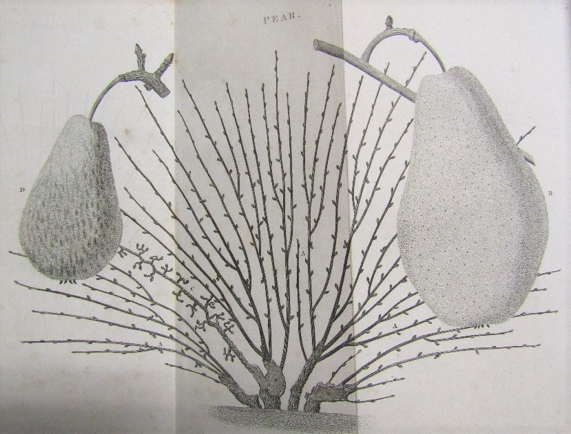 Lot 814 - FORSYTH WIlliam - Treatise on the Culture and Management of Fruit Trees, Fourth Edition 1806,