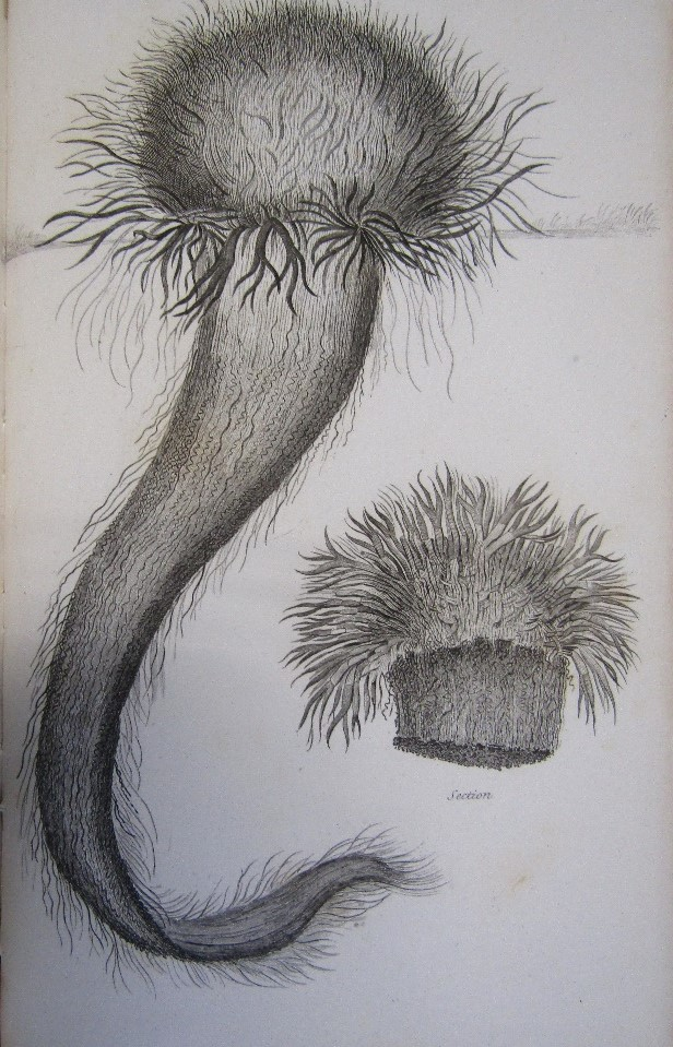 Lot 819 - Journal of A Naturalist published by John Murray 1829 with illustrations, 403 pages