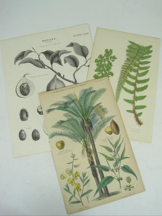 Lot 29 - Natural history prints, a large collection, comprising c.1059 8vo/12mo-sized prints of birds (
