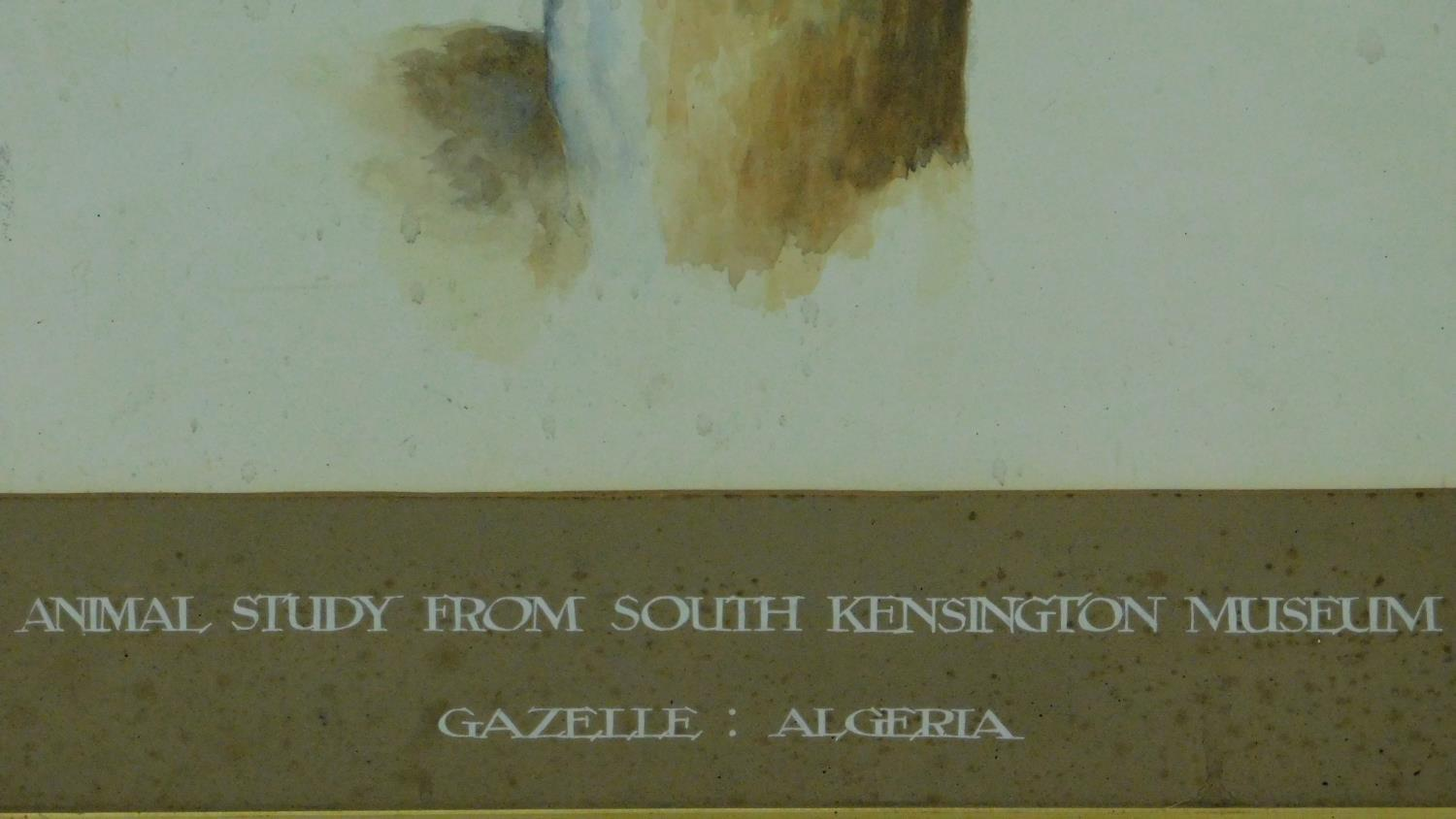 A framed watercolour, gazelle, inscription to mount. 73x59cm - Image 3 of 5