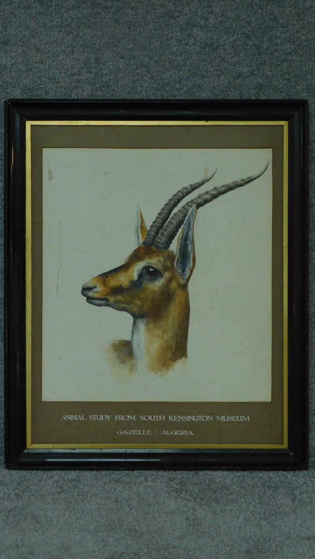 A framed watercolour, gazelle, inscription to mount. 73x59cm