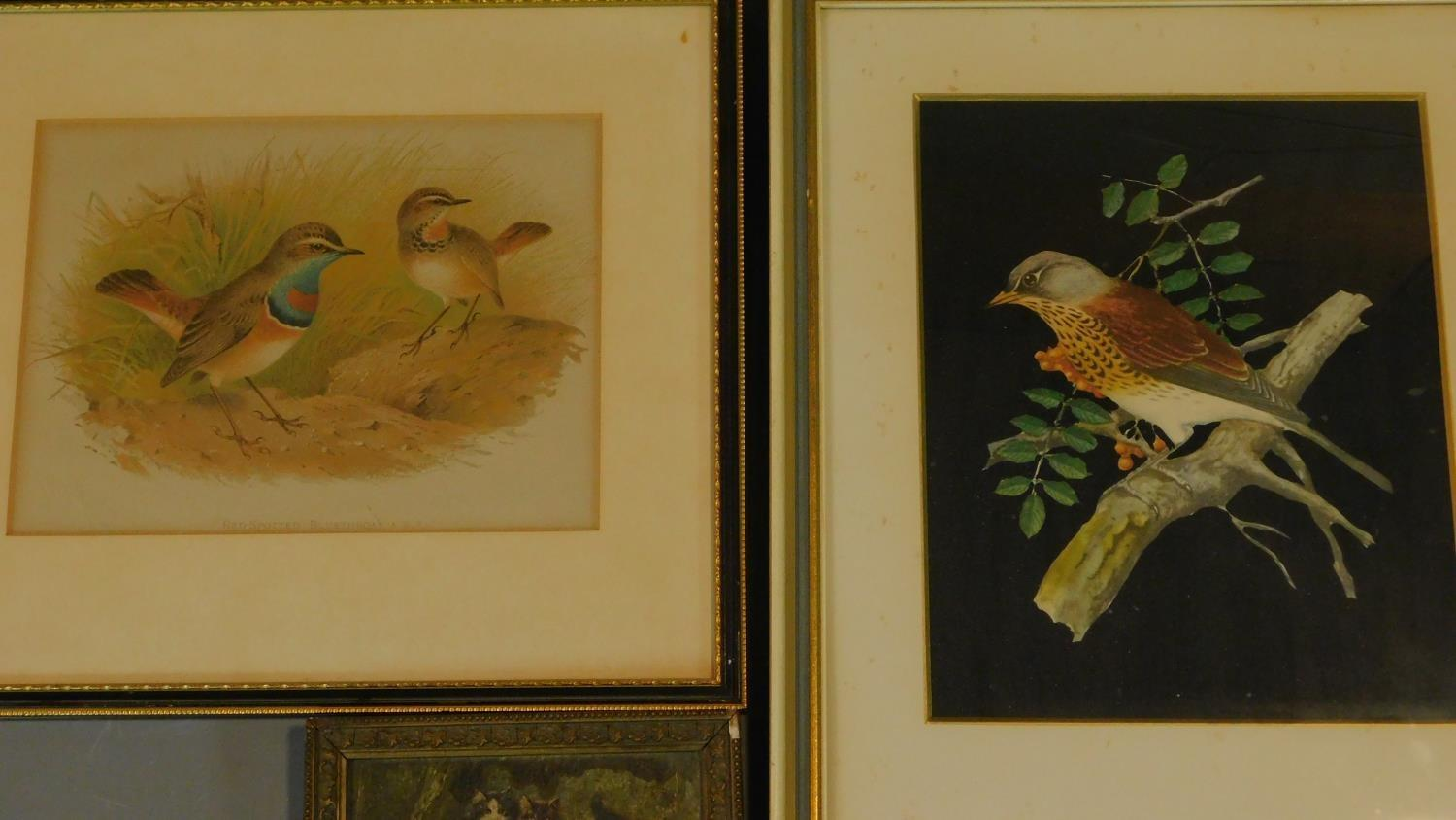 A miscellaneous collection of eleven framed and glazed prints of avian and architectural interest. - Image 7 of 7