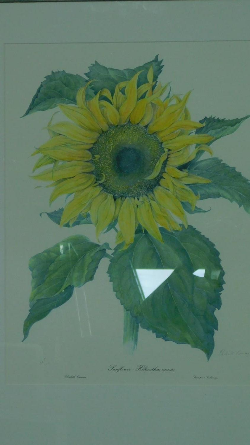 Two framed and glazed prints, sunflower and lemons. 82x67 (largest) - Image 3 of 7