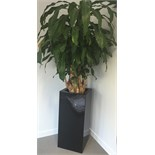 Lot 15 - 2x Large Potted Plants