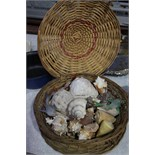 Collection of shells etc.