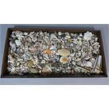 A Large Collection of Seashells in a Wooden Tray. 50cm x 100cm