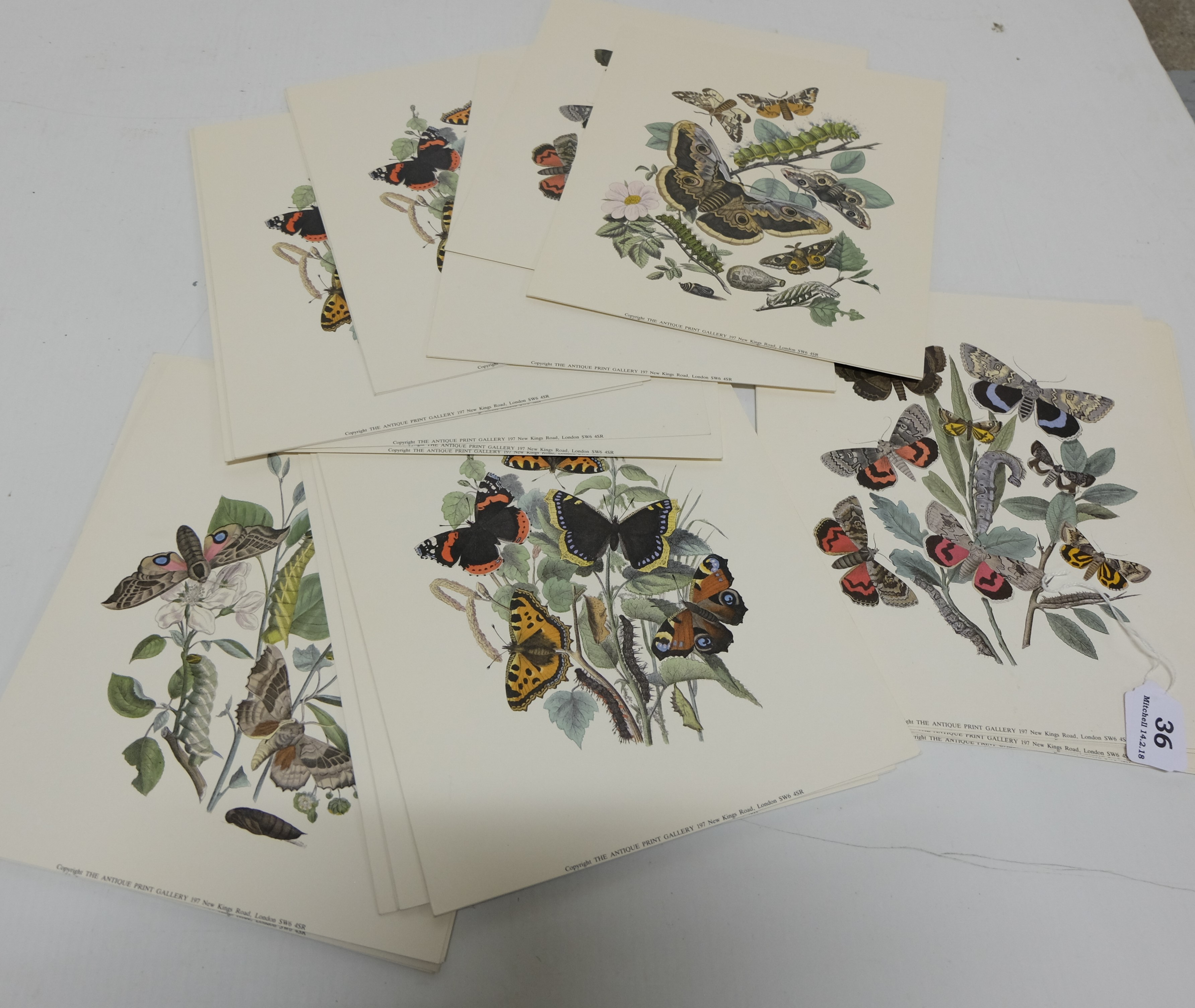 """Lot 36 - Group of Butterfly Prints by the """"Antique Print Gallery, London"""""""