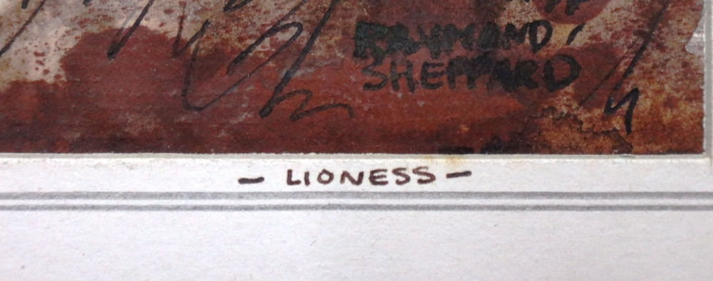 Lot 1551 - Raymond Sheppard (1913-1958), Lioness, pen ink and wash, signed, inscribed on mount, unframed,