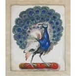 DEUTSCHER MEISTER17. Jh.PfauAquarell auf Pergament, 16 x 12,5 cm, gerahmt unter Glas und