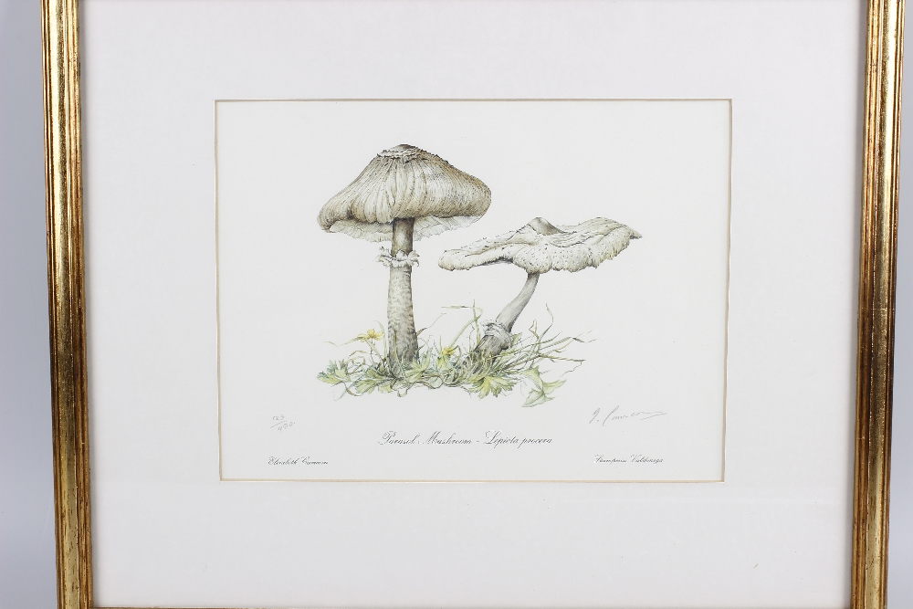 Lot 654 - Two botanical studies (20th century). The first a limited edition print 123/400 depicting a