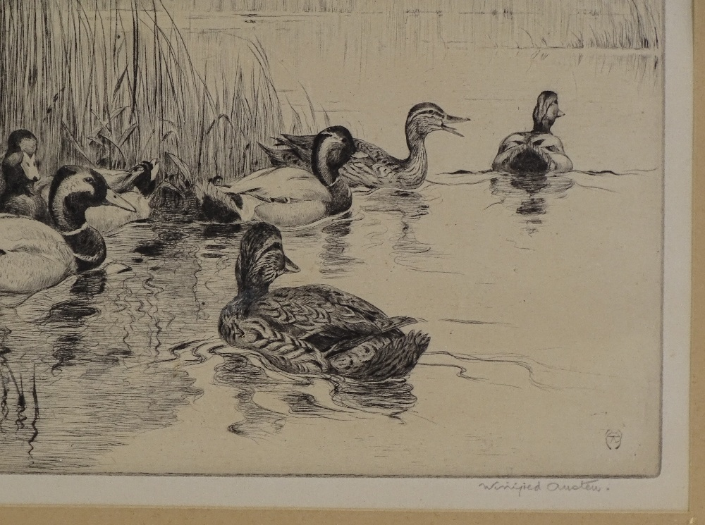 Lot 1024 - Winifred Austen, etching, ducks among the reeds, s