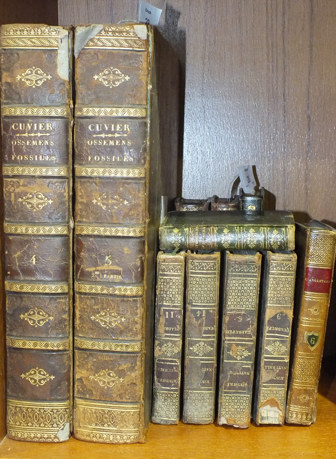 Lot 28 - Cuvier (Georges), Recherches sur les Ossemens Fossiles, Vols IV and V only, 72 engr plts, some fldg,