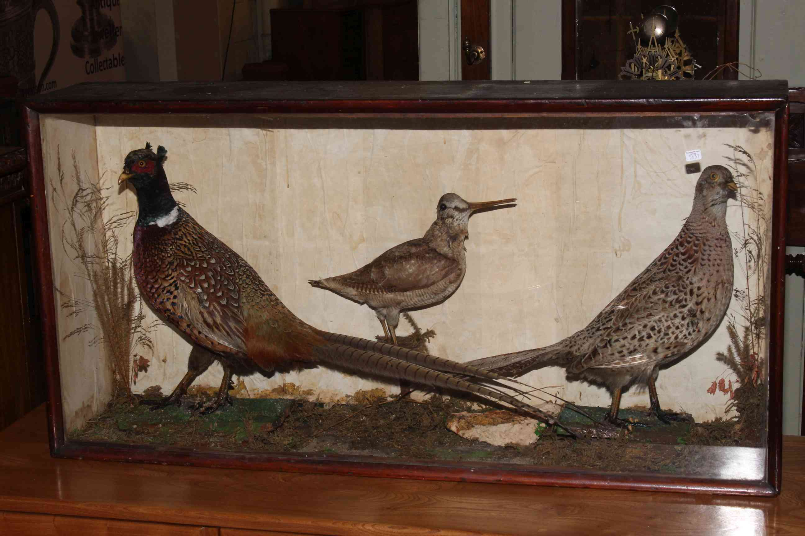Lot 49 - Cased taxidermy of two pheasants and a snipe