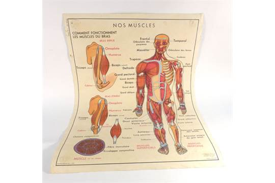 A French double-sided anatomical classroom poster \'Le Corps Humain ...