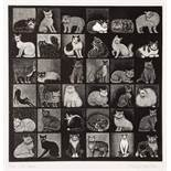 HILARY PAYNTER (b. 1943) 'Cat Show', wood engraving, pencil signed in the margin, titled and
