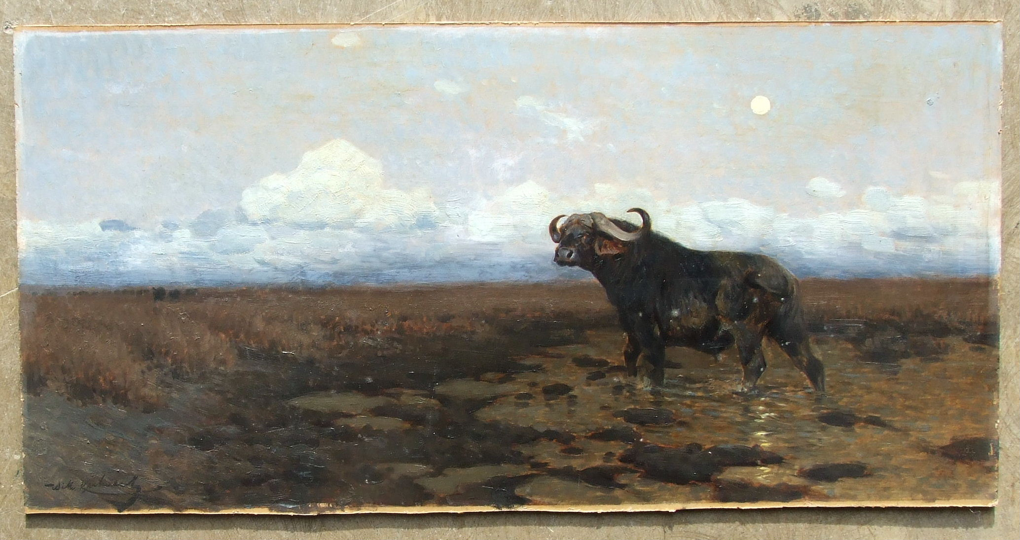 Lot 66 - Friedrich Wilhelm Kuhnert (1865-1926) IN THE MARSH - A CAPE BUFFALO STANDING IN A MARSH, WITH