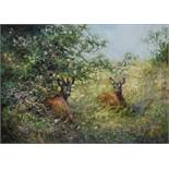 Klaus MAIER (XX).Strong roe buck in summer.51 cm x 70 cm. Painting. Oil on canvas. Signed lower