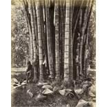 Ceylon: Rubber trees, palms, landscapes, plantations and villages