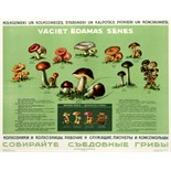 Advertising Poster Collect Edible Mushrooms