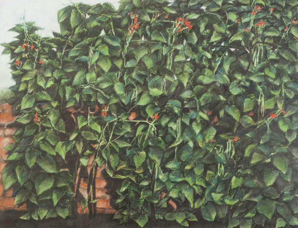 "Lot 105 - PETER OAKLEY (1935-2007) PASTEL 'Bean Rack' Unsigned, titled verso 20 ½"" x 26 ¾"" (52.1cm x 68cm)"