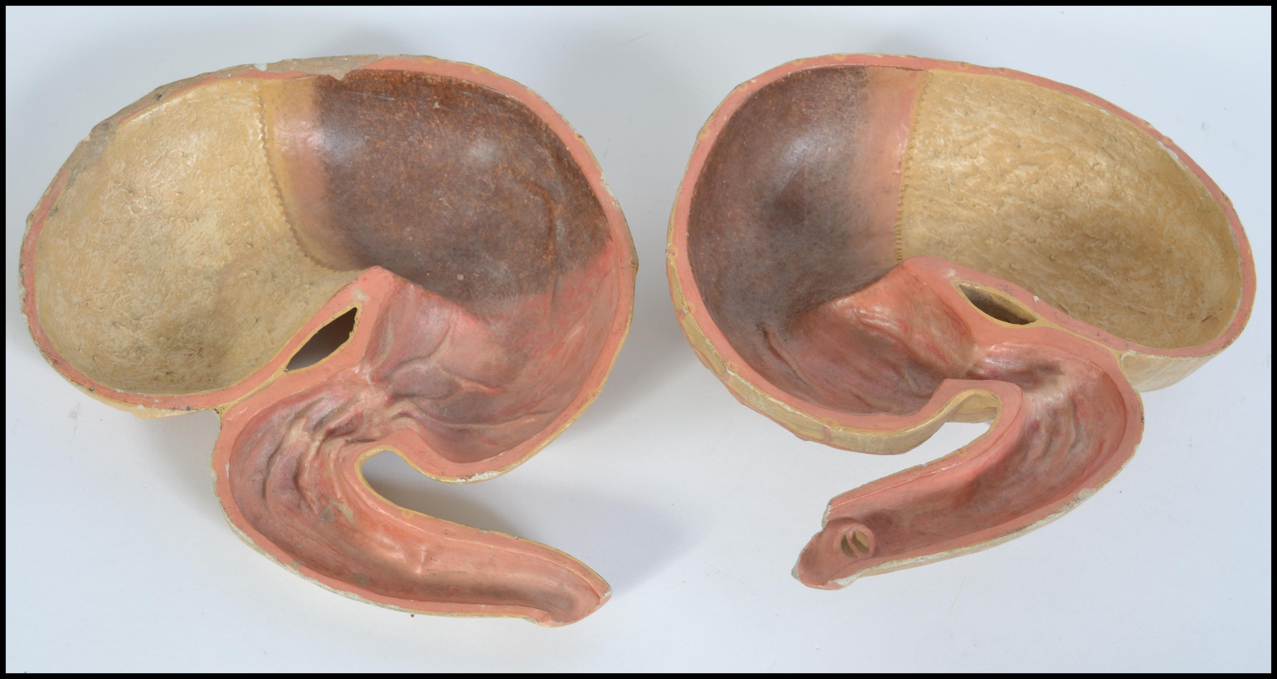 Lot 916 - A 20th century medical model of a human stomach split onto two halves. Measures 25cms wide.