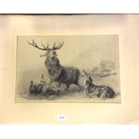 Good pencil sketch of stag at bay indistintly signed